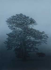 Coastal Cypress, oil on paper 71x51cm 2015  SOLD