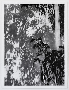Shadow Leaves #11 charcoal on paper 2016 $2,500 AUD