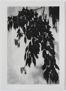 Shadow Leaves, charcoal on paper , image 37 x25 cm Framed SOLD