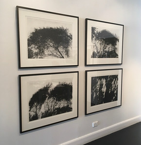 Installation at Olsen Irwin Gallery Sydney 2016 All charcoal on paper $2,500 each