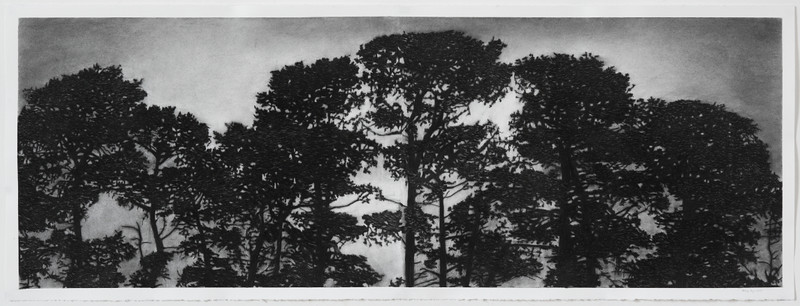 Trainline Pines, charcoal on paper, diptych image 52 x148cm SOLD