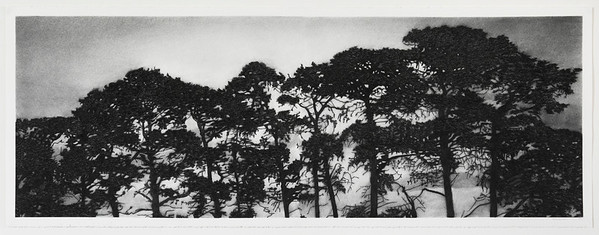 Birregurra Pines, charcoal on paper diptych image 52x148cm 2016 SOLD