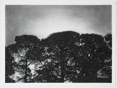 Nocturnal Pines, charcoal on paper,  framed 72 x92 cm SOLD