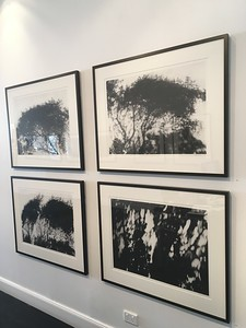 Installation charcoal on paper $2,500 each