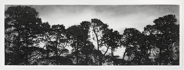 Railway Pines, charcoal on paper, diptych image 52 x148cm $6,500 Framed