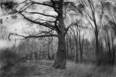 Михайлов Алексей - сказочный лес - пейзаж