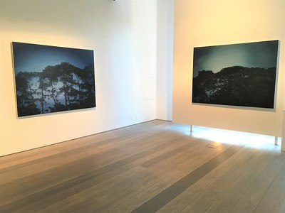 Pines at Twilight, $16,500 & Nocturnal Pines SOLD oil on linen 137 x183cm