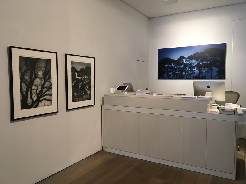 Shifting Light Olsen gallery 2017