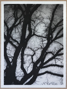 Winter Branches, charcoal on paper, 2016 framed  SOLD
