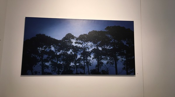 Evening Pines, oil on linen 91 x183cm 2017 SOLD