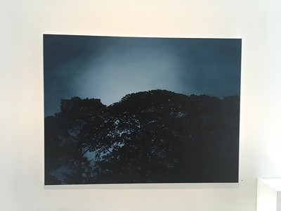 Nocturnal Pines, oil on linen 137 x183cm 2017 SOLD