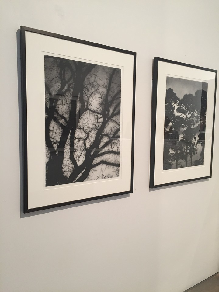 Winter Branches & Nightfall Silhouette, charcoal on paper SOLD