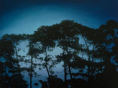 Pines at Twilight, oil on linen 137x183cm 2017 $16,500 AUD