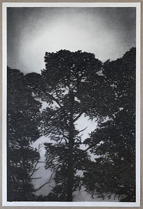 Railway Pines, charcoal on paper 2016 $6,500 AUD framed