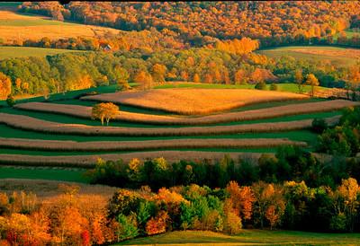 geometic farming