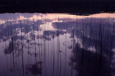 IMG_5465 sunset reeds printed