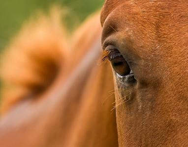 3083_ADK-Horse-Eye 11x14printed