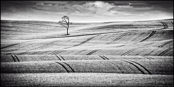 Highly Commended - Steve Harrison - Making tracks