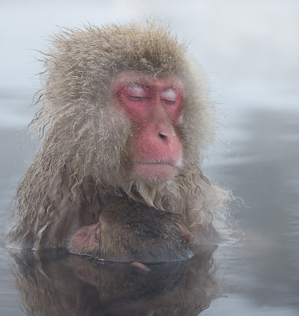Highly Commended - Kevin O'Neill - Monkey Motherhood