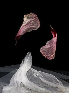 09_Dancing petals