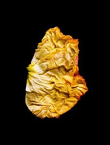 20_Yellow petal