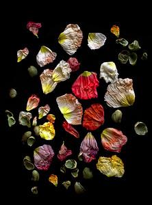 10_Petals on black