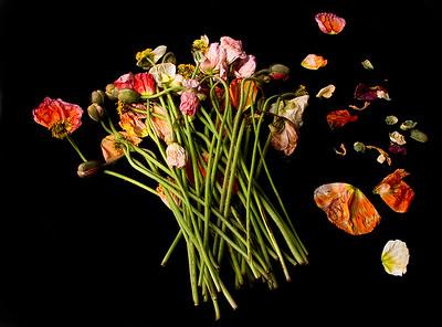 12_Poppies