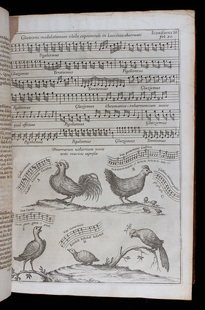 "In Book I Kircher focuses upon sound as found in 'nature'. In this illustration he attempts to realise in musical notation domestic bird song. The nightingale's song comes first, followed by those of the cock, the hen laying eggs and calling her chicks, the cuckoo and quail. The parrot is shown to be imitating humans as it says ""Hello"" in Greek. The cockerel's music has the familiar portamento at the end of each phrase; as might be expected, the cuckoo's call is notated as a falling minor third.<br><br> <b>Author:</b> Athanasius Kircher<br> <b>Title:</b><i> Musurgia universalis  </i> [The complete science of music] (Rome, 1650) <br> <b>Shelfmark:</b> <a href=""http://idiscover.lib.cam.ac.uk/permalink/f/1nnjft8/44CAM_ALMA21586140680003606""> D.4.22</a>"