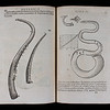 "Woodcut illustrations of cornetts (left page) and a serpent (right page). <br><br><b>Author:</b> Marin Mersenne<br> <b>Title:</b><i> Cogitata physico-mathematica  </i>[Physico-mathematical thoughts] (Paris, 1644) <br> <b>Shelfmark:</b> <a href=""http://idiscover.lib.cam.ac.uk/permalink/f/1nnjft8/44CAM_ALMA21573621010003606""> C.14.3</a>"