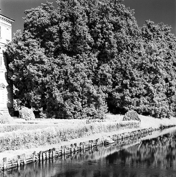 56  Rich Tree