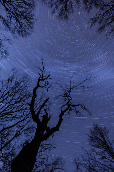 "SATURDAY, NOVEMBER 7, 2009<br /> <br /> STAR TRAILS 9500<br /> <br /> ""Star Trails over the Ghost Maple""<br /> <br /> This tree is a maple tree that I like to call ""The Ghost Maple"", since (to me at least) the silhouette of the tree resembles a rather ""ghostly"" looking figure. Each year after the leaves fall I like to make images of the ""Ghost Maple"". When the leaves are on the trees the profile of the tree just doesn't stick out the way it does after the leaves have fallen. This year, I wanted to get some shots of the stars behind the tree.  My original desire was to get a star trail image. It would take 3 consecutive nights of shooting the tree to get the shot I wanted.  <br /> <br /> When I got to the tree on the first night, the clear skies that were prevalent over Lake Superior were nowhere to be seen deep in the woods and I had to deal with a very overcast sky. So, I took the opportunity to try and get a little creative with the lighting. I waited until the moon was up (of course, I couldn't SEE the moon because of the clouds, but there were some thinner areas of cloud where, on occasion, the moonlight would sort of come through) and I made some exposures with the tree illuminated from the brake lights on my car.<br /> <br /> On the second night, the sky looked a little more promising for some stars. Again when I got up to the tree the clouds had moved in, although they were much thinner than the previous night. Star trails weren't going to work on this night, either, as there were once again too many clouds.  So, instead I shot a high ISO ""short exposure"" image of the stars and the hazy clouds as the moon was rising in the distance.<br /> <br /> On the third night I got what I wanted. Crystal-clear skies without a cloud in sight!  I lined up my composition, dialed in my focus, and locked the shutter down for a one-hour exposure. I had great fun each night I was up there, and I guess the whole point of this is that even though you may not get what you are hoping for on the first try, don't get too discouraged because you may end up with some neat images that you weren't expecting!<br /> <br /> Camera: Canon EOS 5D Mark II<br /> Lens: Canon EF 17-40mm<br /> Focal length: 17mm<br /> Shutter speed: 53 minutes<br /> Aperture: f4.0<br /> ISO: 100"