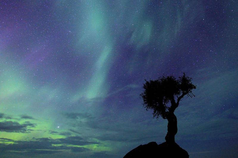 """AURORA 1385<br /> <br /> """"Aurora Storm"""""""