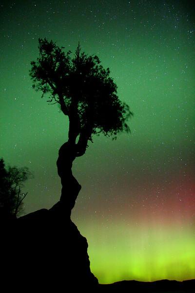 AURORA 1013<br /> <br /> The Aurora Borealis and the Spirit Tree