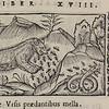 Olaus. Historia de gentibus septentrionalibus [D.10.26]