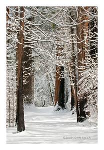 N32 Snow Path (9 x 6)