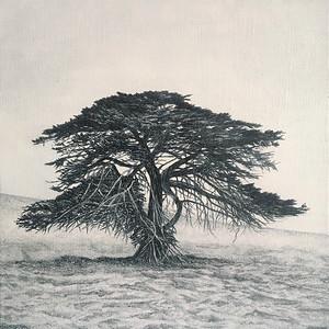 Jack's Tree 1, SOLD