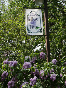 Lilac Time Banner