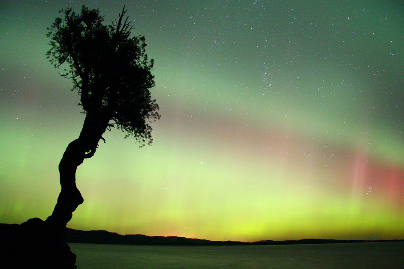 "AURORA 1006<br /> <br /> ""Awesome Aurora""<br /> <br /> A 30 second exposure of the northern lights over the Spirit Little Cedar Tree in September 2006."