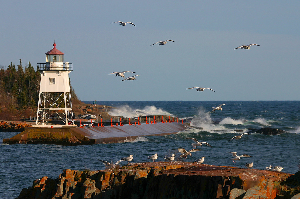 "ANIMALS BY AIR 8828<br /> <br /> ""Grand Marais Gulls""<br /> <br /> Grand Marais, MN"