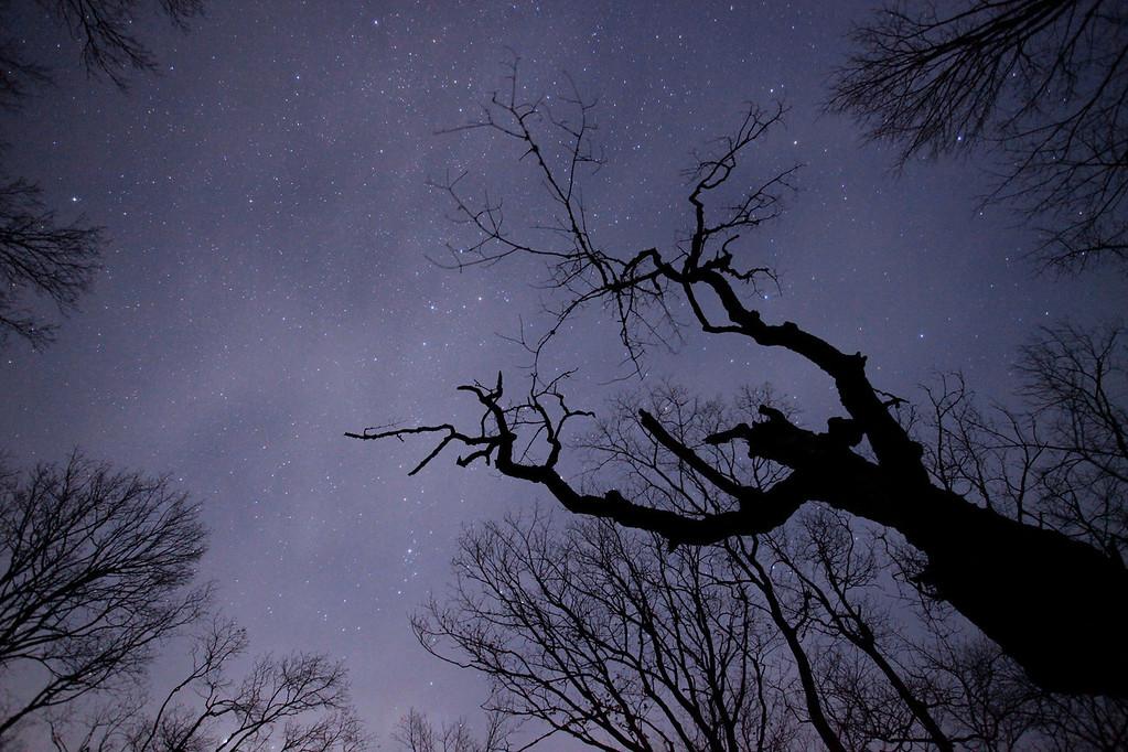 """MOONLIGHT 9417<br /> <br /> """"Ghostly Galaxy"""""""