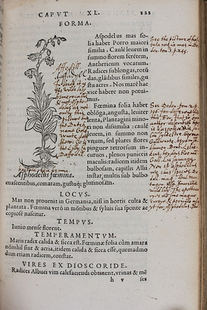 "This publication by the German physician Leonhart Fuchs is nowadays recognised as a masterpiece in Renaissance botany, not least on account of its ground-breaking naturalist woodcut illustrations. Published in numerous editions and languages in the sixteenth century, Fuchs' <i>De historia stirpium</i> achieved a hugely influential standing amongst contemporary botanists across Europe. <br><br> This edition, printed in Lyon, bears extensive scholarly annotations. On this page we see inscribed in an early hand the English name of a plant ('daffadyll') next to its printed illustration. A later hand, that of the Cambridge orientalist William Bedwell, corrects both author and previous annotator, stating that the picture shown 'is the wilde lily hemerocallis &amp; not Asphodelus'. Bedwell supports his assertion with a cross reference (including volume and page number) to the Latin edition of another botanical work by the Flemish botanist Rembert Dodoens. In other parts of this volume Bedwell refers to an English edition of the same Dodoens work published in 1578. <br><br><b>Author:</b> Leonhart Fuchs <br> <b>Title:</b><i> De historia stirpium commentarii insignes </i> [Notable commentaries on the history of plants] (Lyon, 1549)<br> <b>Shelfmark:</b> H.19.5  <a href=""http://idiscover.lib.cam.ac.uk/primo-explore/fulldisplay?docid=44CAM_ALMA21420910460003606&amp;context=L&amp;vid=44CAM_PROD&amp;search_scope=SCOP_QUE&amp;tab=cam_lib_coll&amp;lang=en_US""> (catalogue record)</a>"