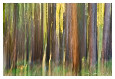 Pastel Woods