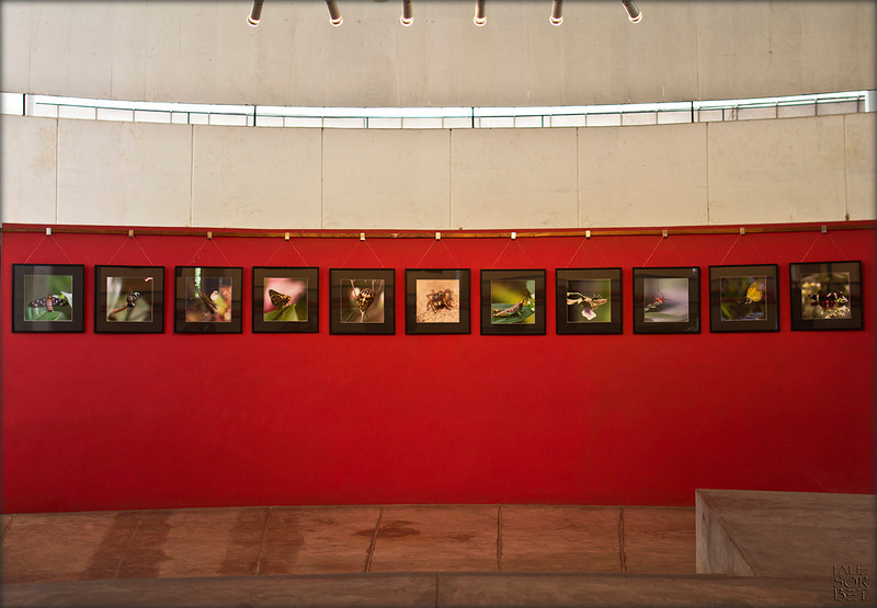 Exhibition Invisible World at the Square gallery Circle Auroville, India, 2012.<br /> An exhibition about the invisible world of insects and spiders.