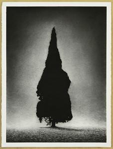 Presence, charcoal on paper, framed 92 x72cm $2,500.