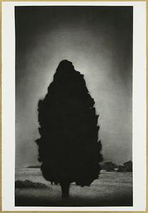 Illumination, charcoal on paper Framed 121.5x78.4cm $6,500.
