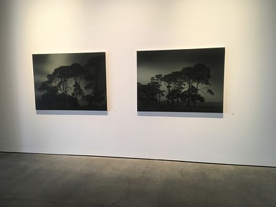 Night Pines 1 $10,500.  & Night Pines II (sold) oil on linen 112 x 152cm