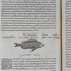 "Guillaume Rondelet was a French professor of medicine. In this book he traces sea creatures' common names back to classical sources like Aristotle and Athenaeus, giving bibliographical references in the margins. Smith underlines or reiterates names as they appear in Greek, English and French. In his notebooks Smith recorded details of his own fish-keeping, including an inventory of all the fish in his ponds. <br><br> <b>Author:</b> Guillaume Rondelet<br> <b>Title:</b><i> Libri de piscibus marinis </i> [Book of marine fish] (Lyon, 1554) <br> <b>Shelfmark:</b> F.9.27  <a href=""http://idiscover.lib.cam.ac.uk/permalink/f/1nnjft8/44CAM_ALMA21416669940003606""> (catalogue record)</a>"