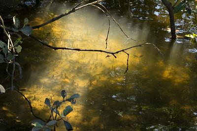 04_Mangroves Cooks River