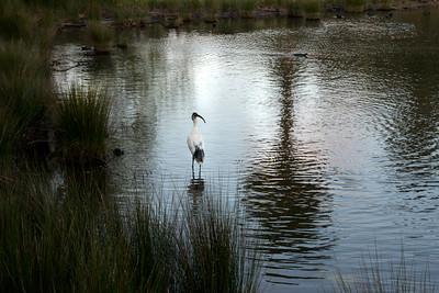 12_Ibis Centennial Park