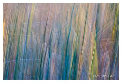 Foxtails & Grass